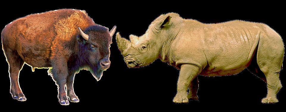 Bison, Bull, Herbivores, Horny, Cattle, Rhino, African