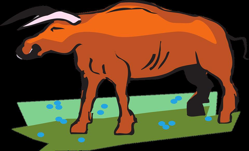 Flowers, Field, Grass, Bull, Horns, Animal, Tail
