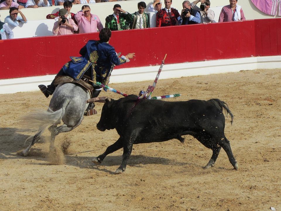 Bull Fighting, Torero, Portugal, Bullfighter