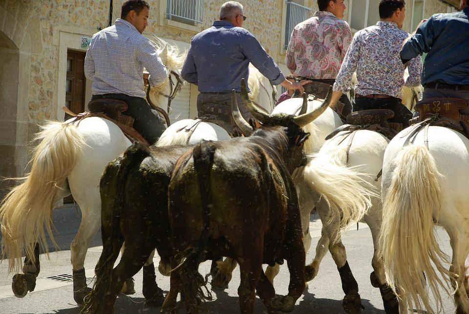 Camargue, Bulls, Gardians, Village Festival, Feria