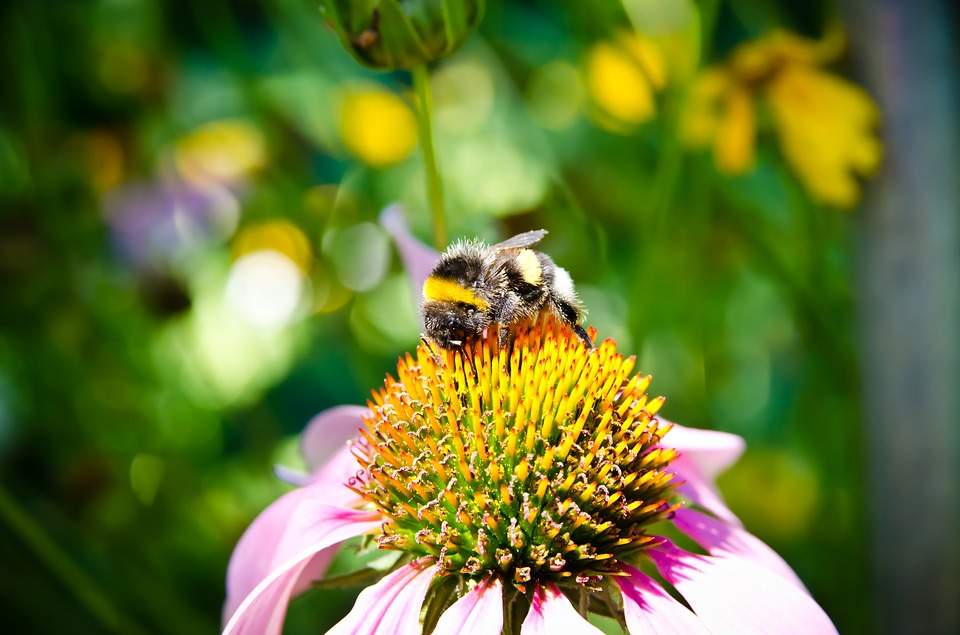 Bee, Bee Collection Pollen, Bumblebee, Close-up View