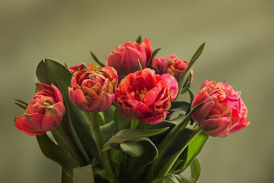 Tulips, Flowers, Bunch, Bouquet, Bunch Of Flowers
