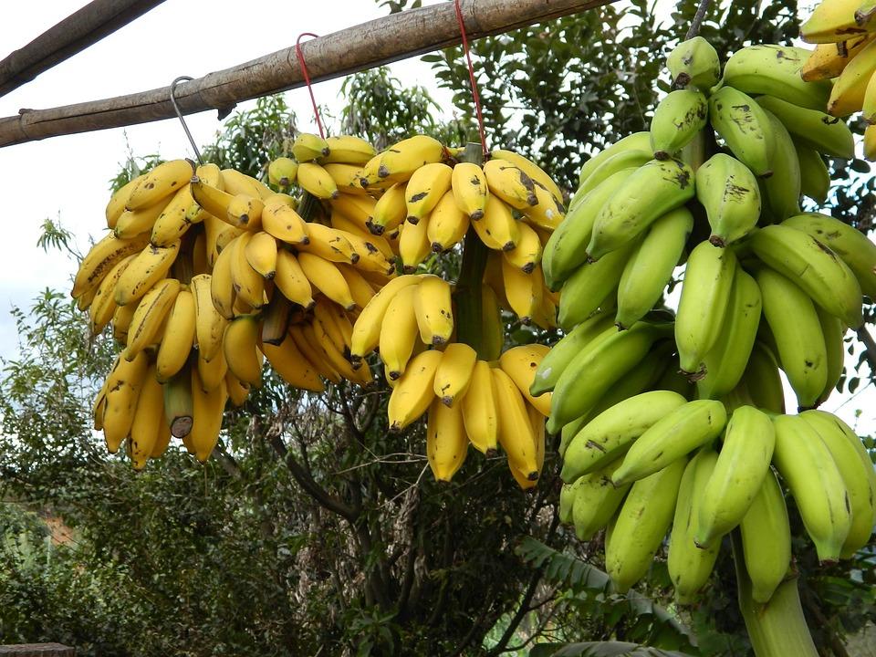 Bunch Of Bananas, Banana, Trade On The Road