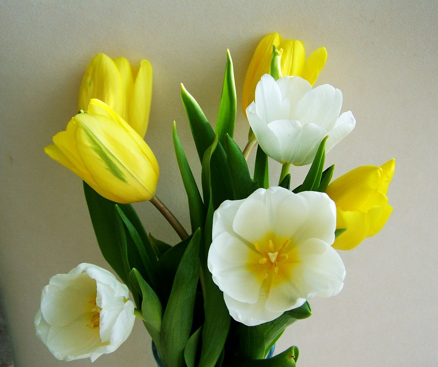 Free photo bunch of flowers tulip yellow and white flower max pixel tulip bunch of flowers yellow and white flower mightylinksfo