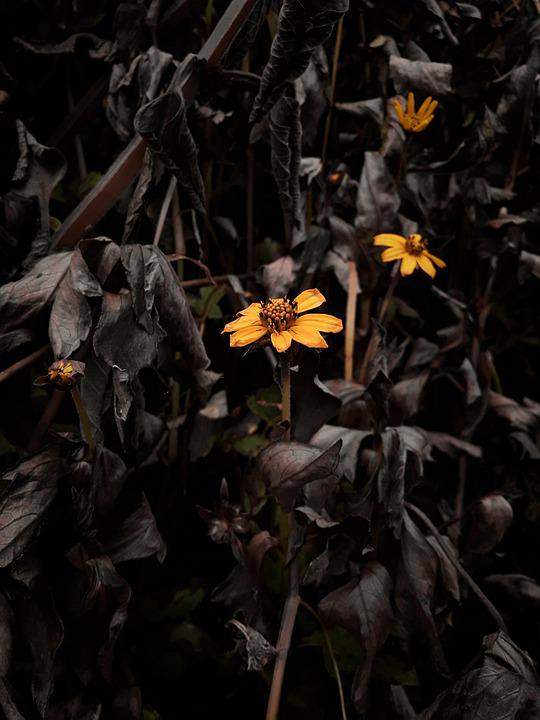 Beautiful, Flower, Bunga Kecil, Bunga