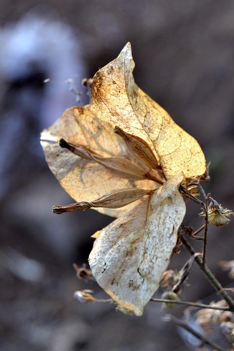 Flower, Autumn, Garden, Plant, Nature, Yellow, Bunga