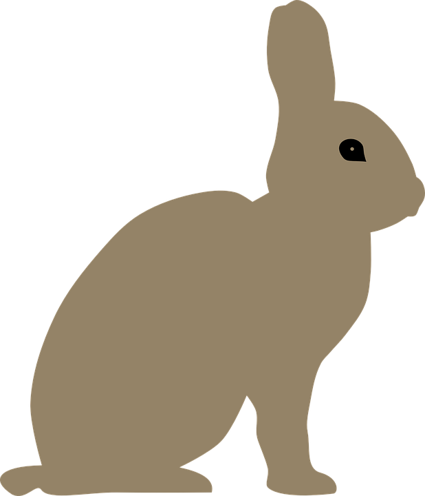 Animal, Rabbit, Bunny, Mammal