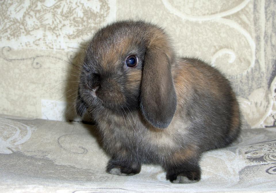 Sweet, Bunny, Brown, Chocolate, Pose, Easter, Rabbit