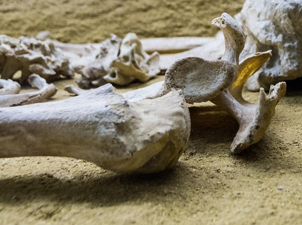 Skeleton, Bone, Femur, Museum, Bury, Dead, Skull, Death