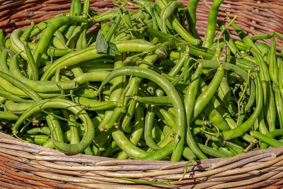 Beans, Vegetables, Basket, Harvest, Bush Beans, Green