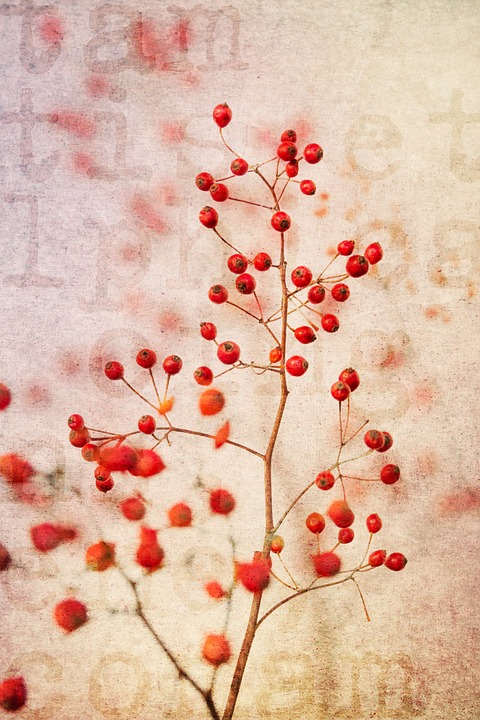 Berry Red, Red, Nature, Plant, Branches, Bush