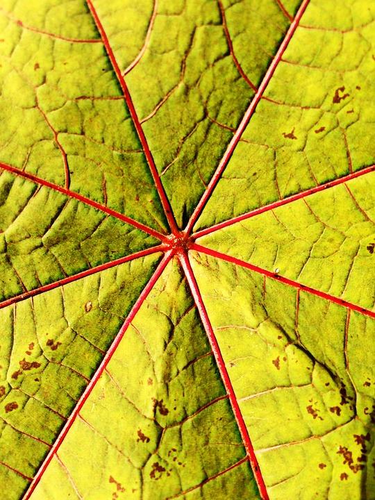 Leaf, Gourd, Wonder Tree, Plant, Bush, Park, City Park