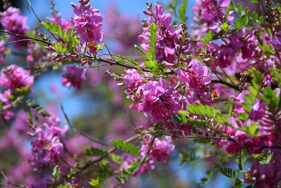 Flowers, Bush, Garden