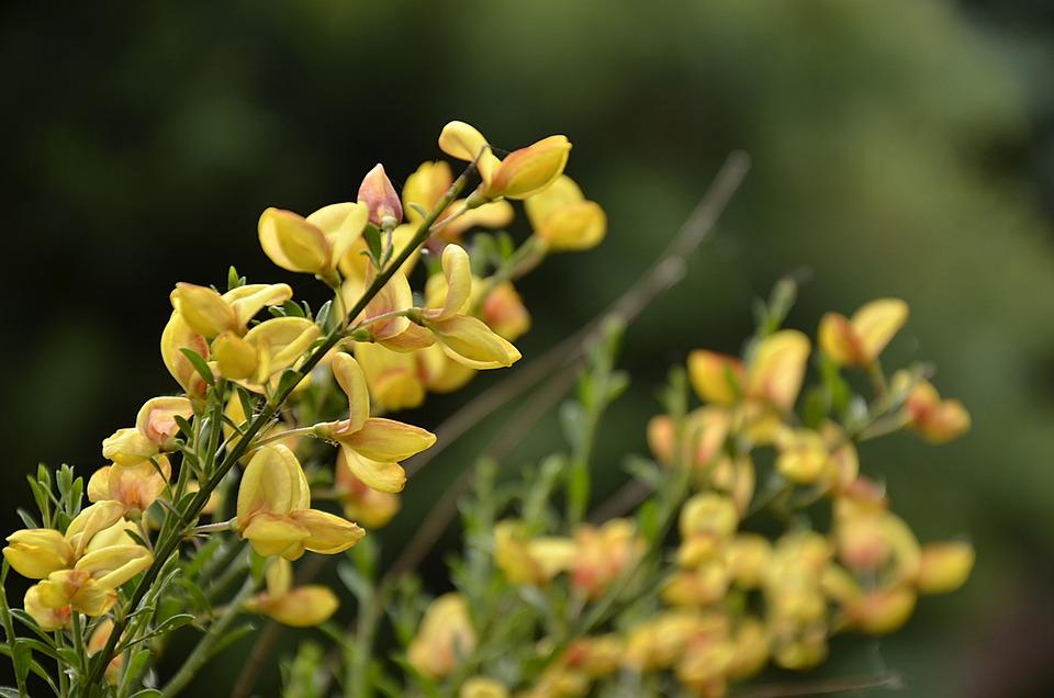 Bush, Garden, Yellow, Green, Plants, Figure, Flowers