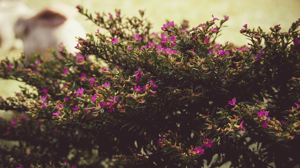 Tree, Bush, Flowers, Hedges, Shrubs, Landscaping
