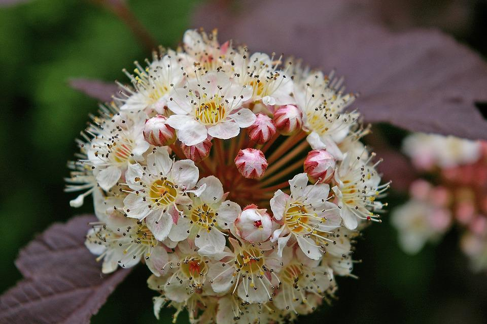 Fuck Bush, Spiere, Bush, Red Leaves, Flowers, Nature