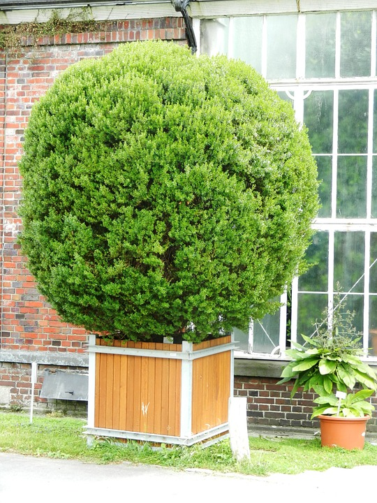 Free photo Bush Plant Garden Green Nature Tree Fancy , Max Pixel