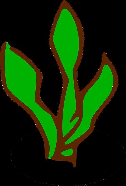 Sign, Plant, Symbol, Shrub, Bush, Ecology, Flora, Green