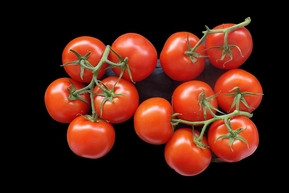 Tomatoes, Bush Tomatoes, Food, Red, Frisch