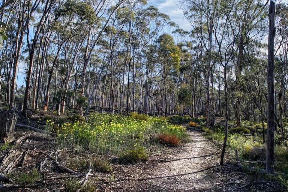 Bush, Bush Walk, Nature, Australia, Hiking, Outdoor