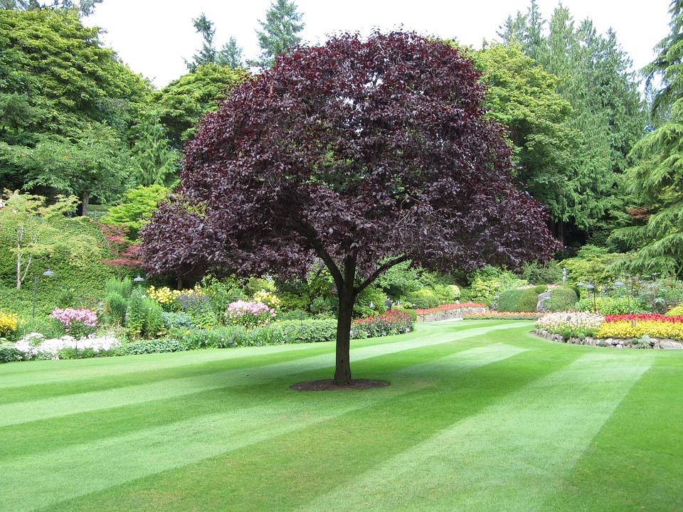 Tree, Park, Green, Nature, Butchard Gardens, Victoria