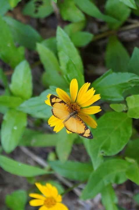 Butterflies, Balneário Camboriú, Flower, Beach, Tourism