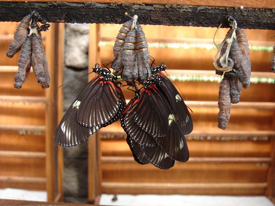 Butterflies, Insect, Dolls