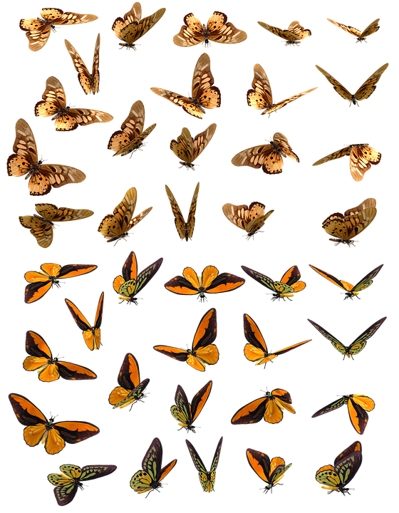 Butterfly, Butterflies, Insect, Swarm, Orange, Brown