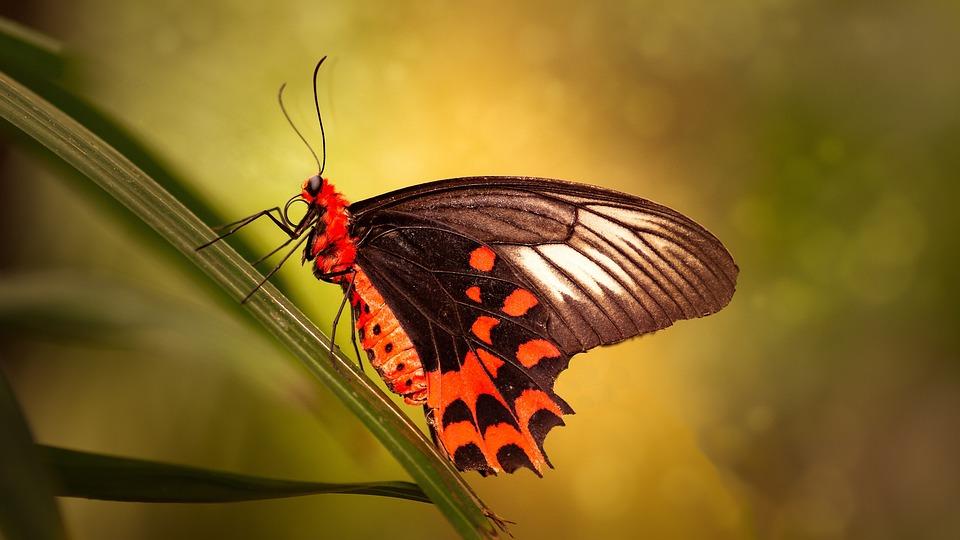 Butterflies, Bug, Nature, Wildlife, Animal Kingdom