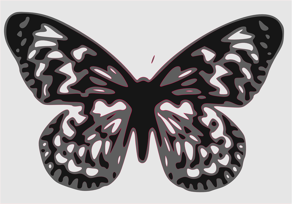 Butterfly, Insect, Animal