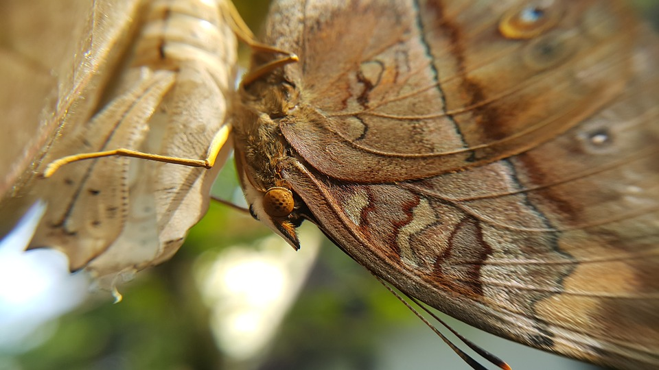 Nature, Insect, Animal, Butterfly, Wing