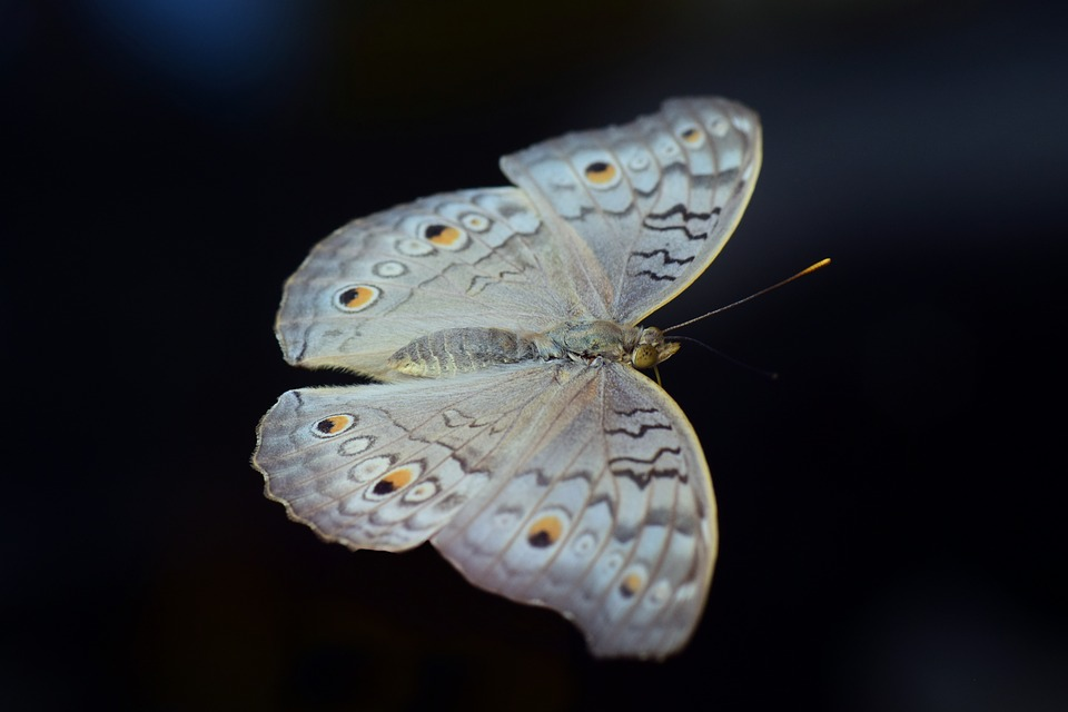 Nature, Butterfly, Animal, Insect, Animal World, Fly