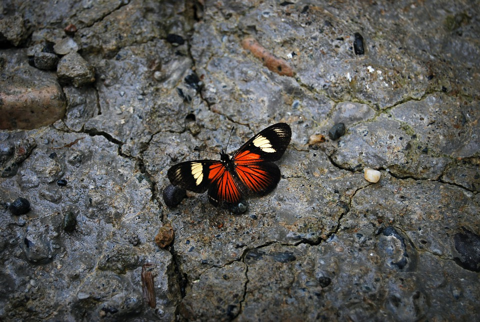 Butterfly, Stone, Nature, Colors, Beauty, Contrast