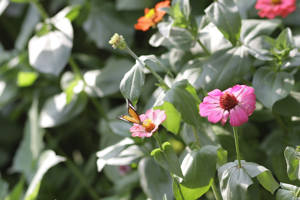 Flower, Butterfly, Nature, Insect, Bloom, Butterflies
