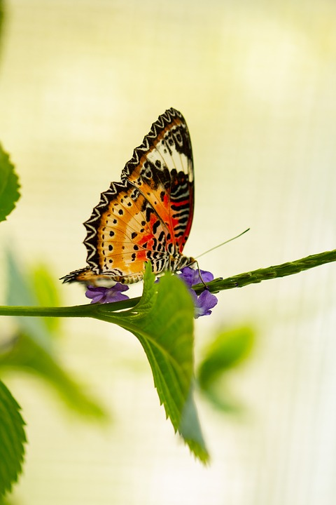 Butterfly, Close Up, Macro, Bokeh, Insect, Leaf, Branch