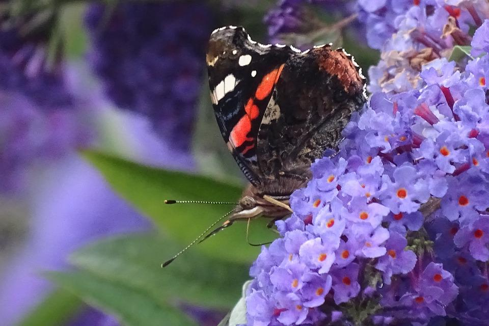 Butterfly, Nature, Freedom, Garden, Bug