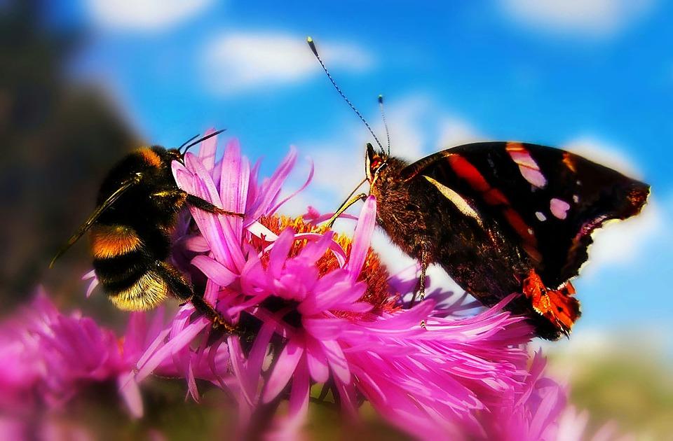 Bumblebee, Butterfly, Flower