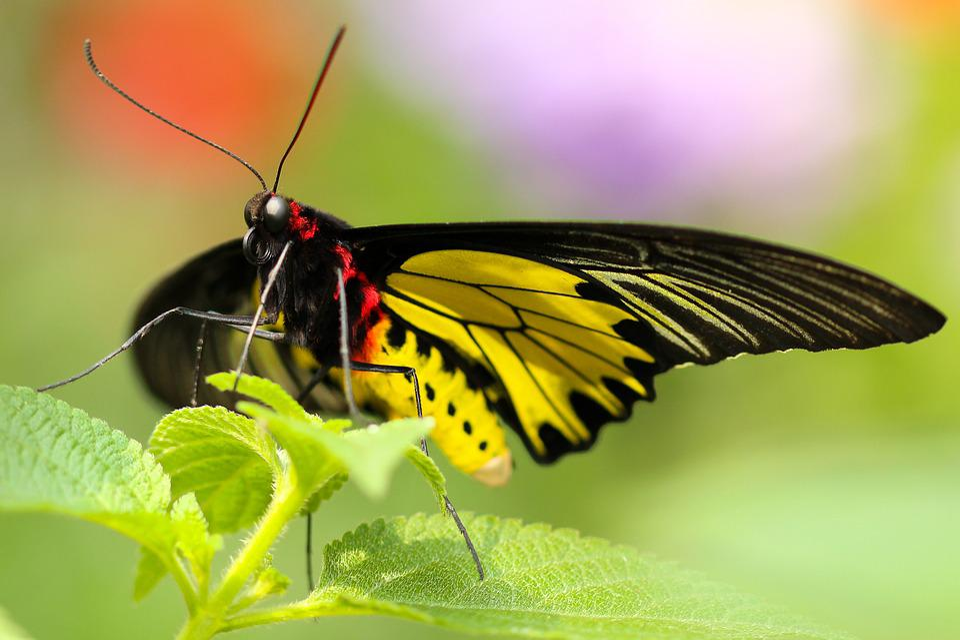 Animal, Antenna, Beautiful, Blur, Butterfly, Close-up