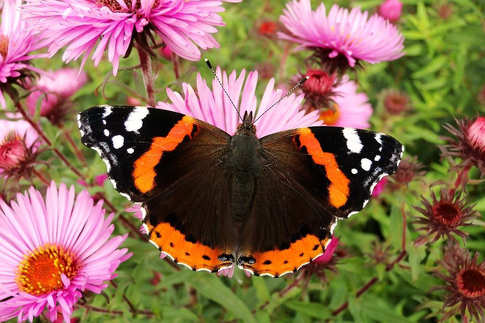 Nature, Flower, Butterfly Day, Plant, Insect, Animals