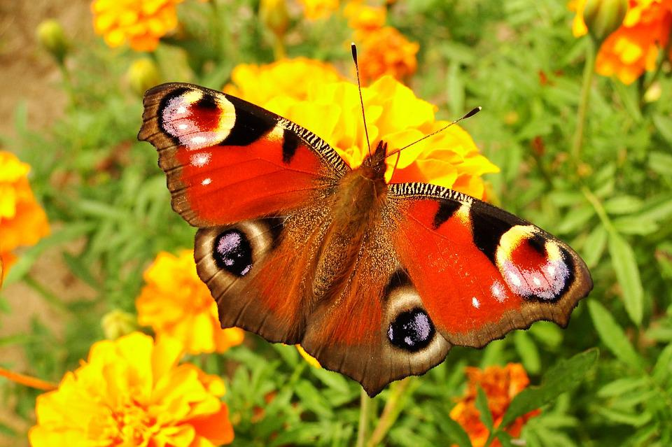 nature flower butterfly day insect garden animals - Garden Animals