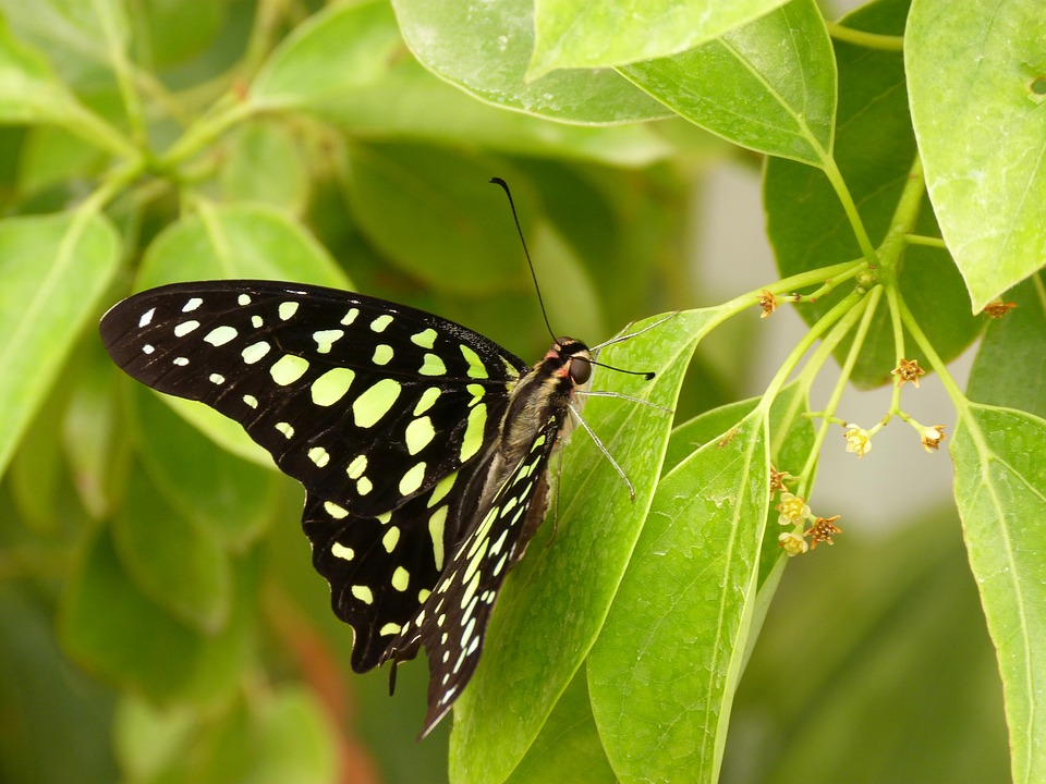 Nature, Butterfly Day, At The Court Of, Insect, Leaf