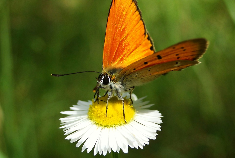 Nature, Insect, Butterfly Day, Summer, Animals