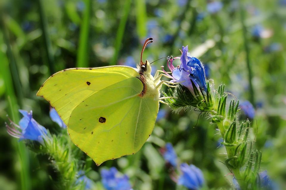 Nature, Flower, At The Court Of, Plant, Butterfly Day