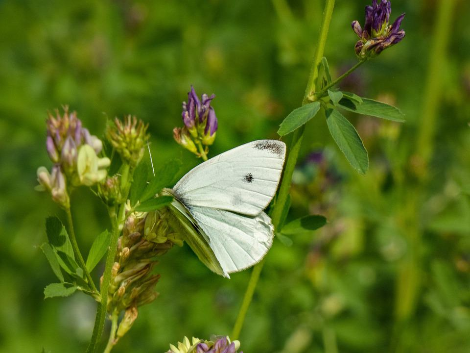 Flower, Butterfly, Pollination, Insect, Entomology
