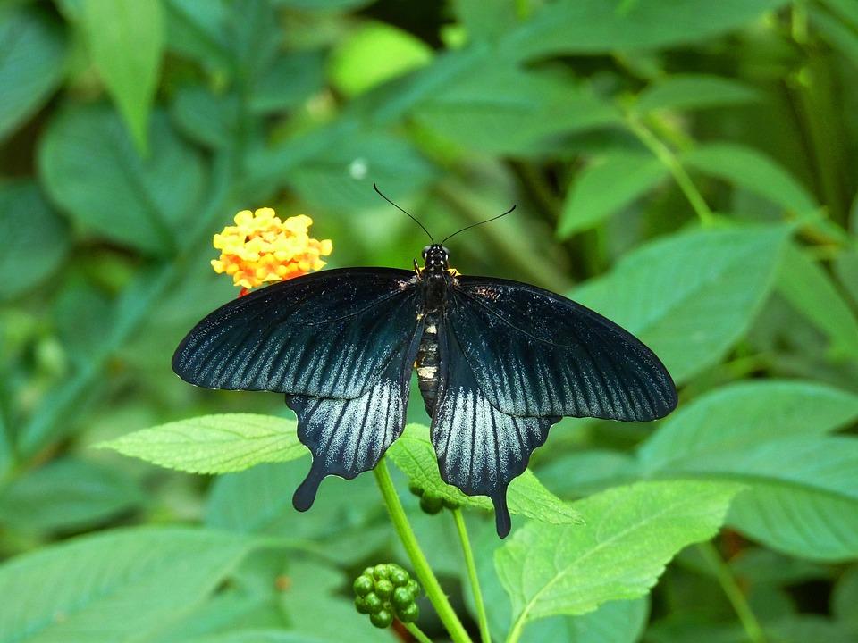 Butterfly, Bug, Flower