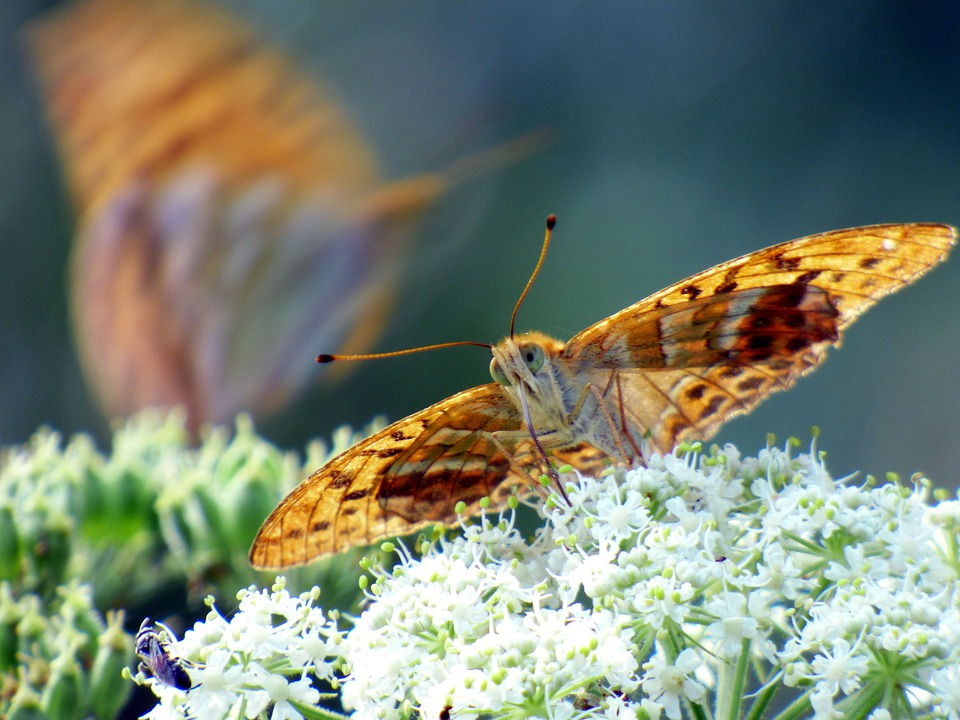 Butterfly, Wings, Flower, Insects, Colorful, Nature