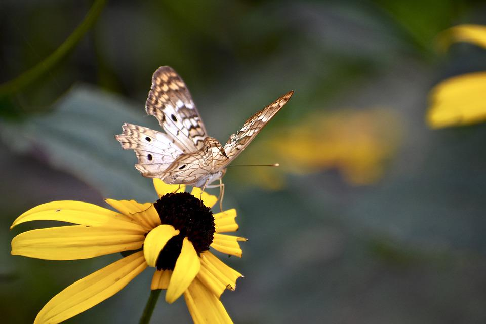 Butterfly, Yellow, Flower, Nature, Insect, Summer