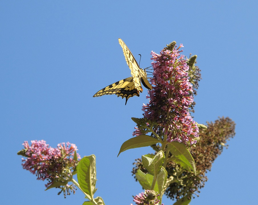 Butterfly, Sky, Flower, Flight, Forage, Nature, Insect