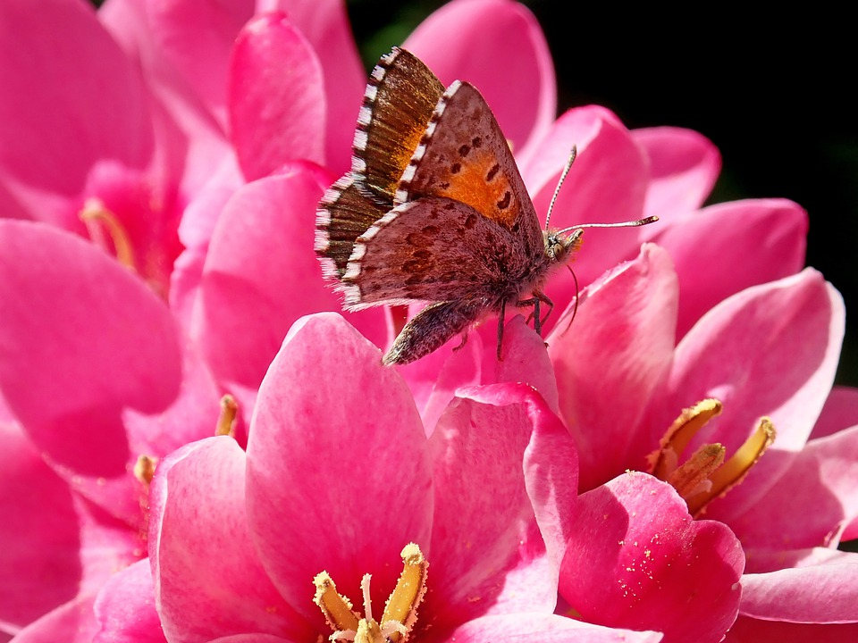 Garden, Flowers, Butterfly, Insect, Wildlife