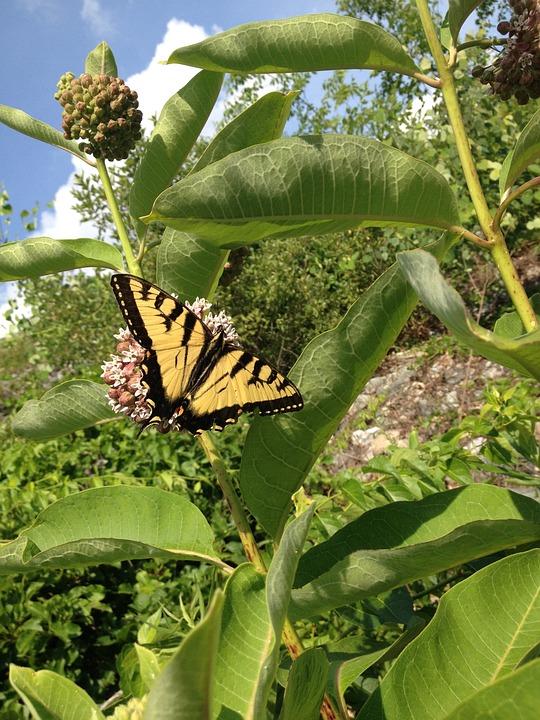 Butterfly, Nature, Summer, Garden